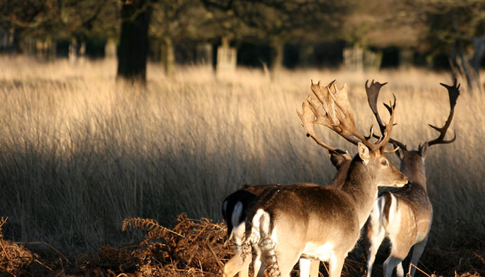 Serviced accommodation near Richmond Park